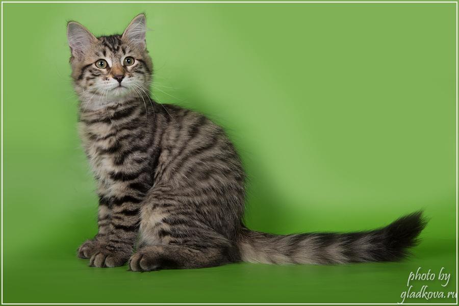 Марина 2017-02-12 кошка для вязки сибирский кот Постельное белье бязи