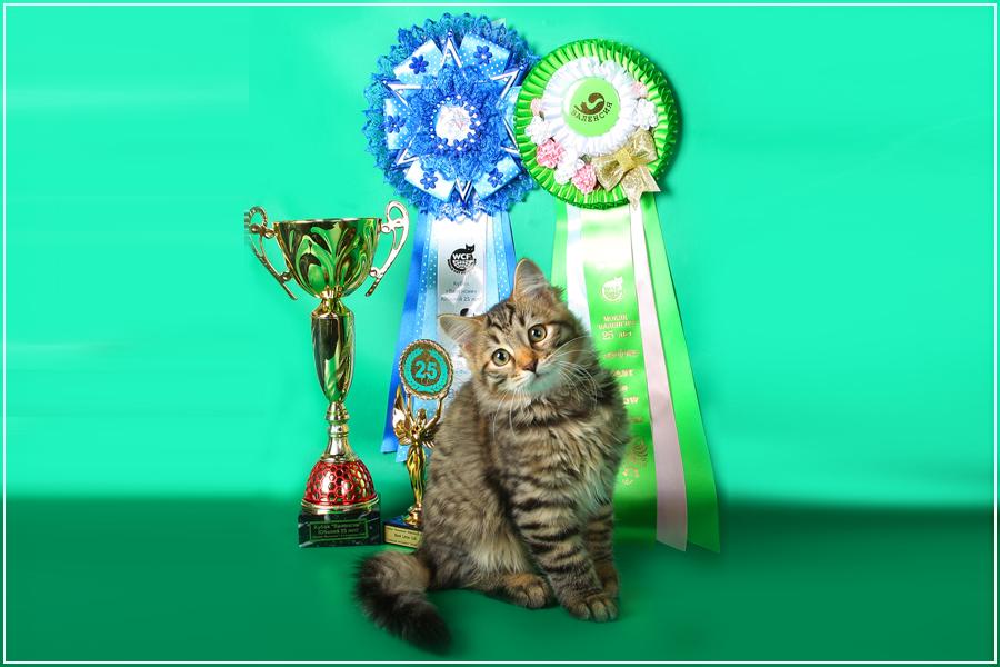 Термобелье оптом кошка для вязки сибирский кот ведущих марок финского