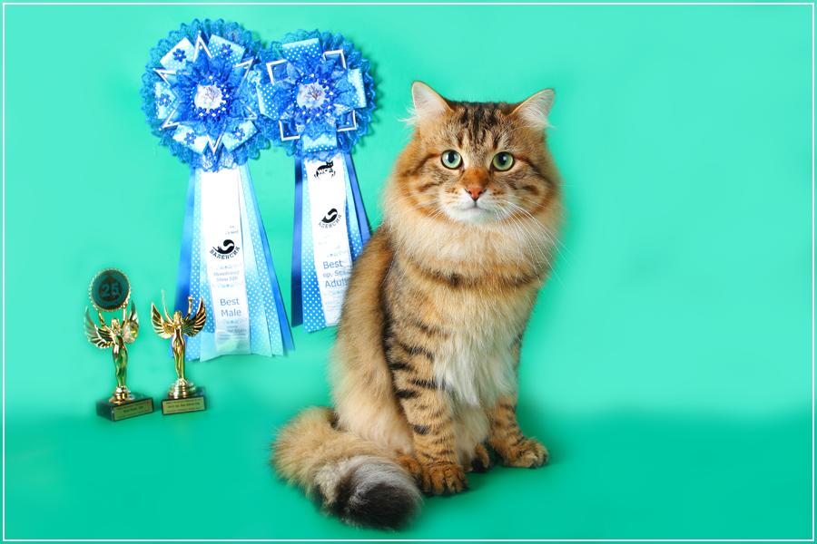 пользовательское кошка для вязки сибирский кот термобелье нужно